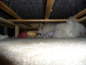 our crazy dog under the bed with her toys